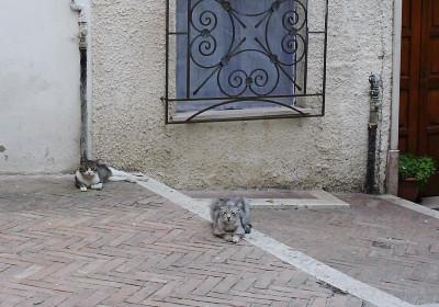 カンポバッソのネコ1