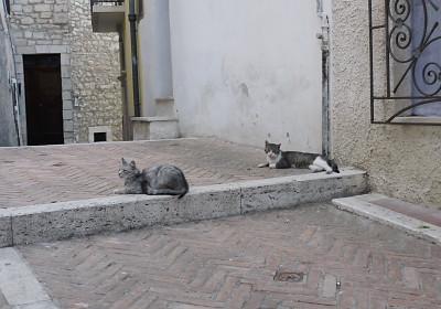 カンポバッソのネコ2
