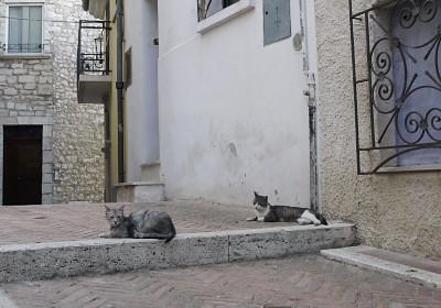 カンポバッソのネコ3