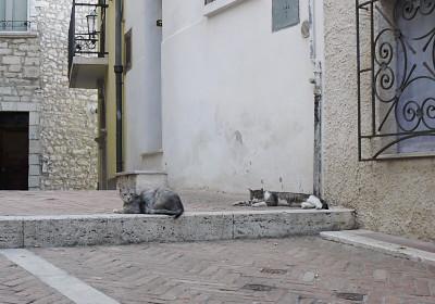 カンポバッソのネコ4