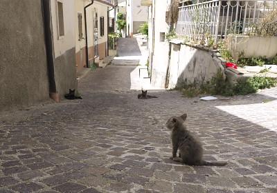 カステルヴェッキオ・ズベークオのネコ