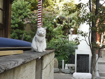 天祖神社の猫