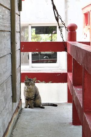 伊計島のネコ