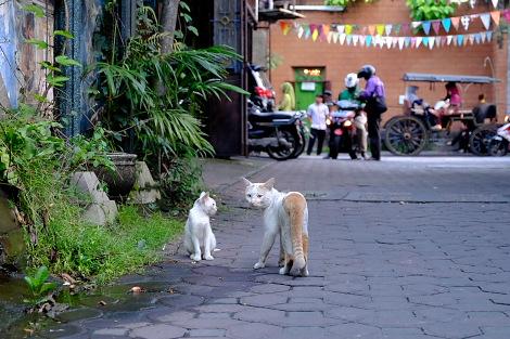 バティック通りのネコ