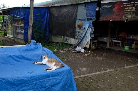 ボロブドゥール遺跡で暮らすネコ
