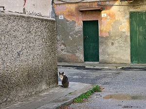 ジョイオーザ・イオーニカのネコ