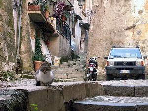 コゼンツァ旧市街のネコ