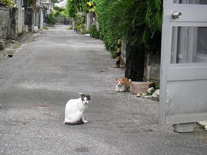 魚屋のそばにたむろするネコ