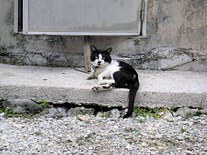 鎖につながれたネコ