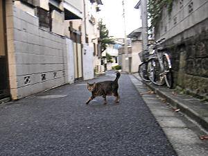 雑司ヶ谷のネコ
