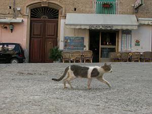 トロペーアのネコ
