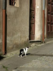 サン・ソスティのネコ