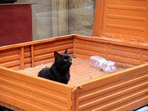 荷台の上のネコ
