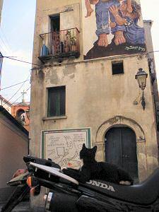 ディアマンテのネコ